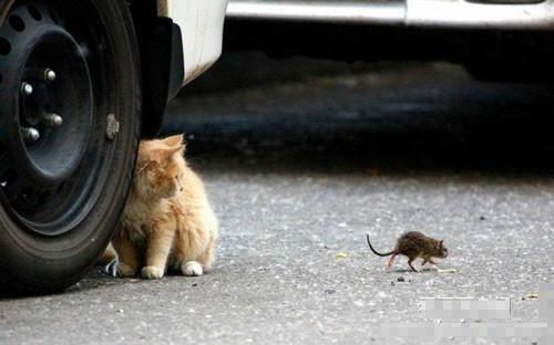 【比耐力】   两只乌龟在田边相对一动不动,老农对一旁的专家说:它